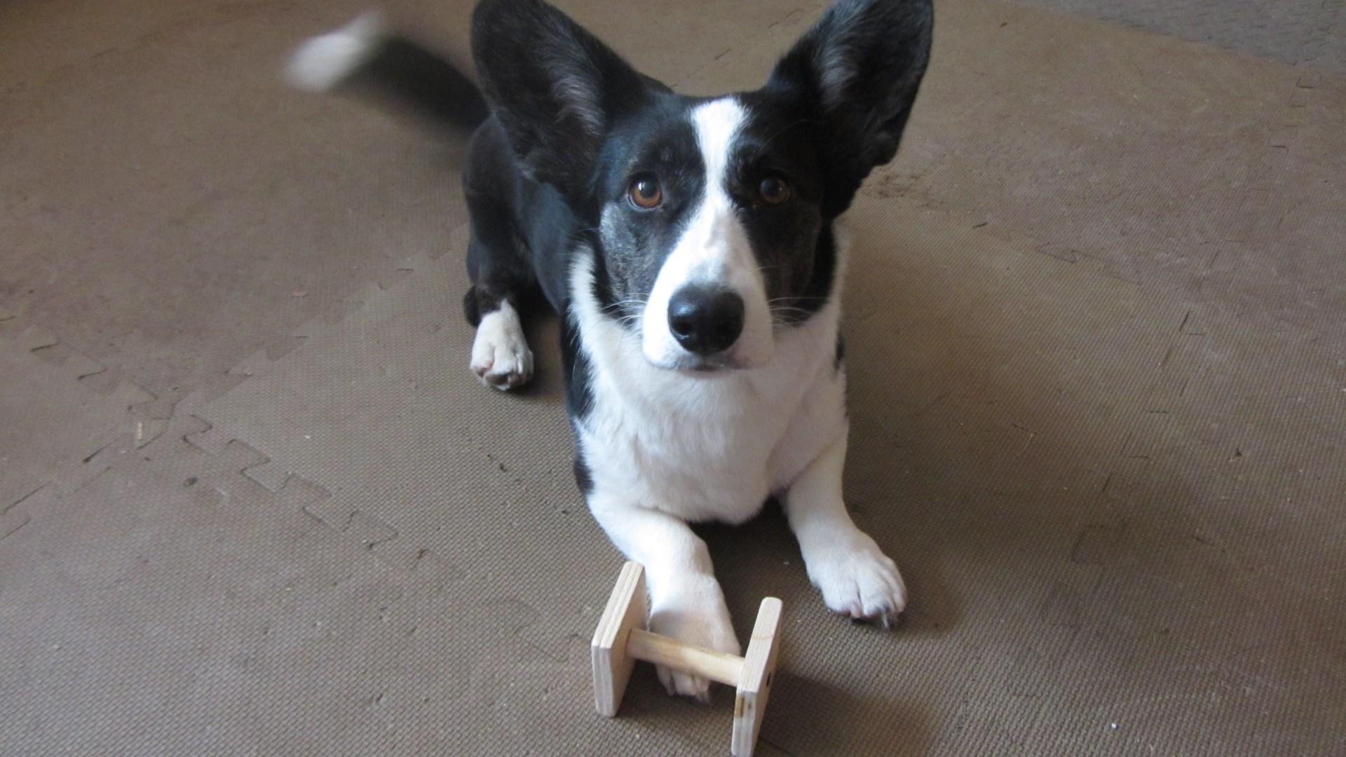 Diy Wooden Obedience Dumbbells Maplewood Dog