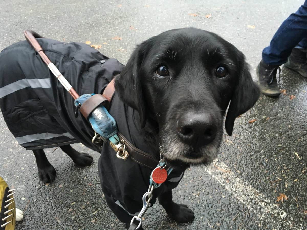 Tom standing in a parking lot in the rain with his guide dog harness over his black rain coat with reflective stripes
