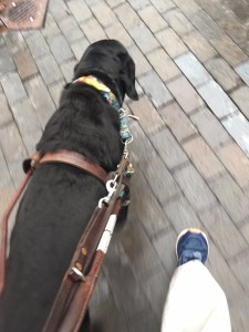 black retriever guide dog leads handler down a brick sidewalk