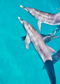 dolphin from boat