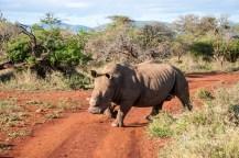 Rhino Sands