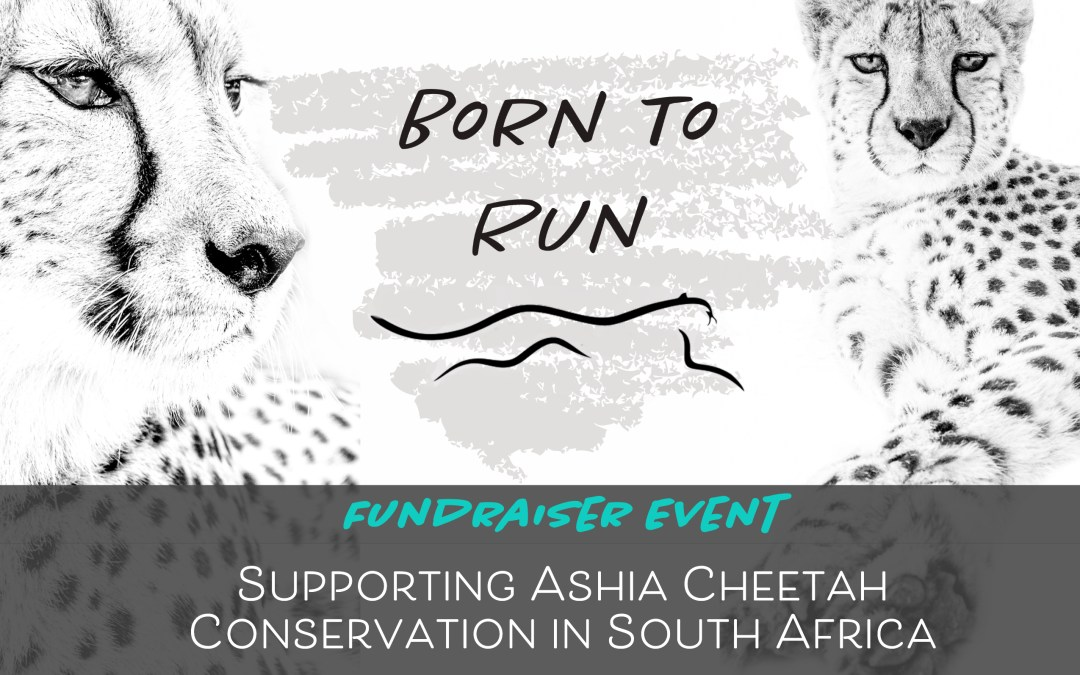 Help Cheetahs With This Fundraiser