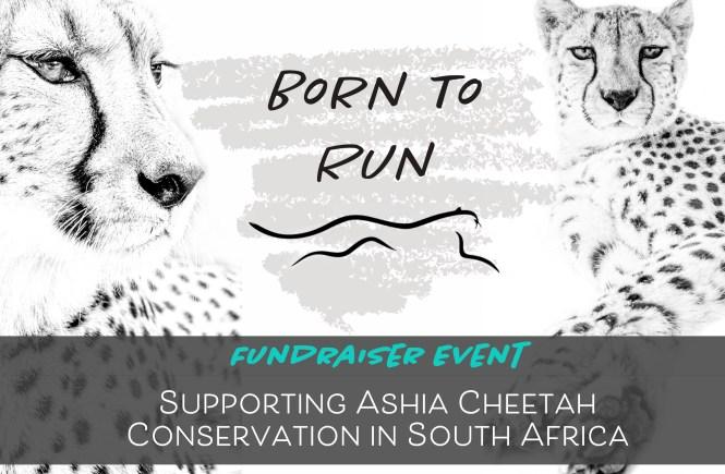 cheetah fundraiser