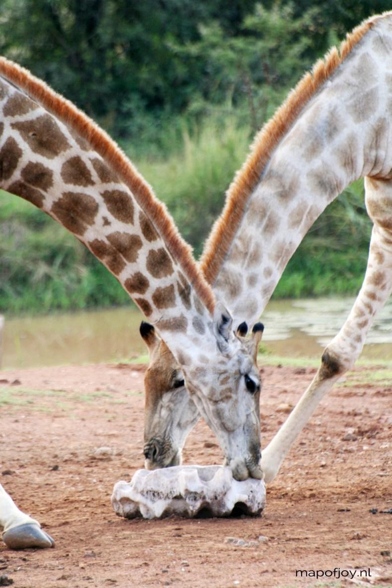 Safari Pilanesberg, South Africa - Map of Joy
