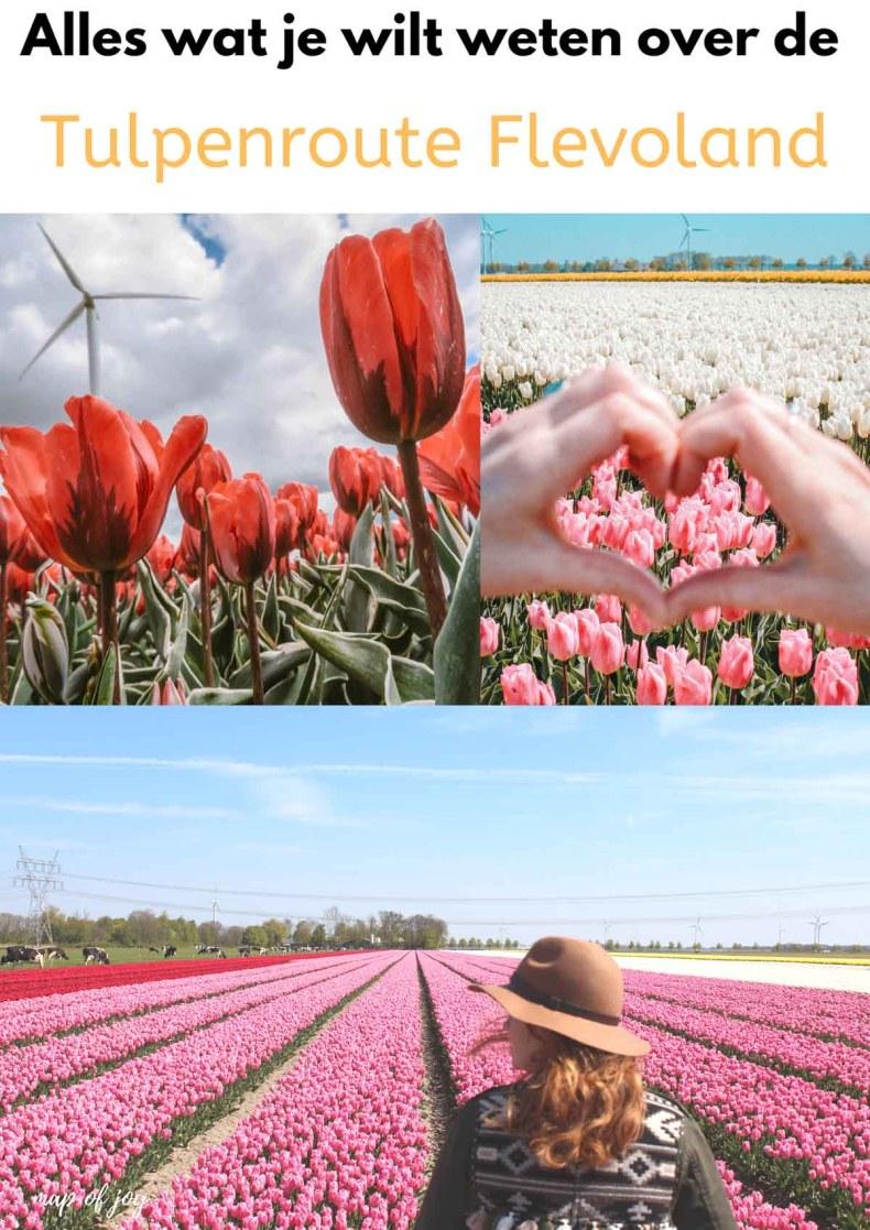 Alles wat je wilt weten over het tulpenfestival in Flevoland - Map of Joy