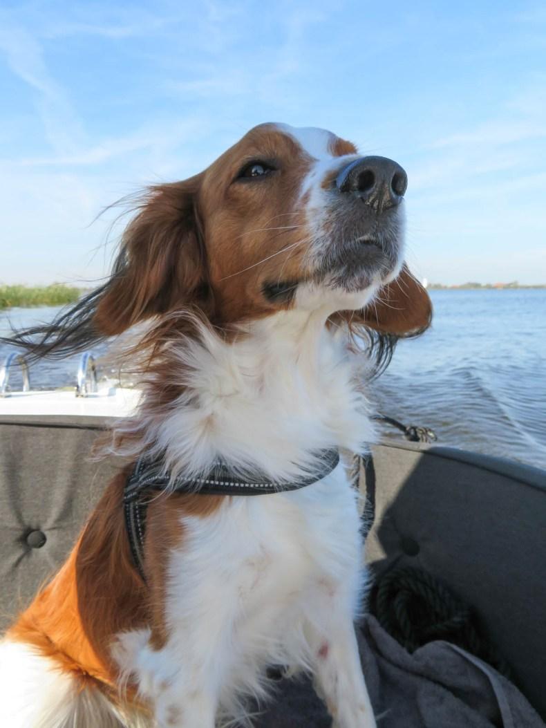 Met een bootje met de hond varen door Nationaal Park De Alde Feanen, Friesland - Map of Joy