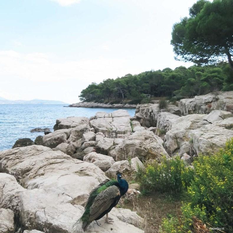 Lokrum Dubrovnik - Map of Joy