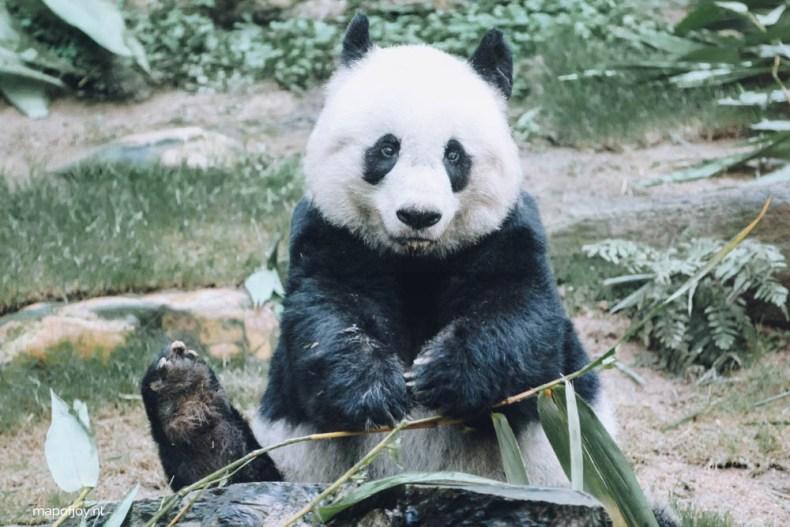Ocean Park, panda, Hong Kong - Map of Joy