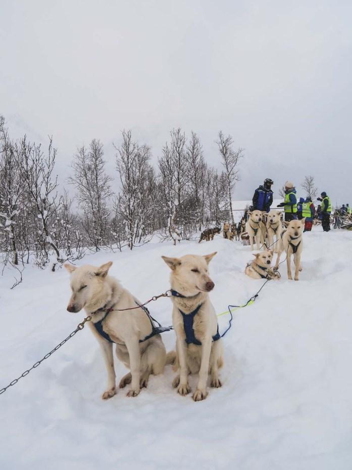 Hondensledetocht in Tromso, Noorwegen, winter - Map of Joy
