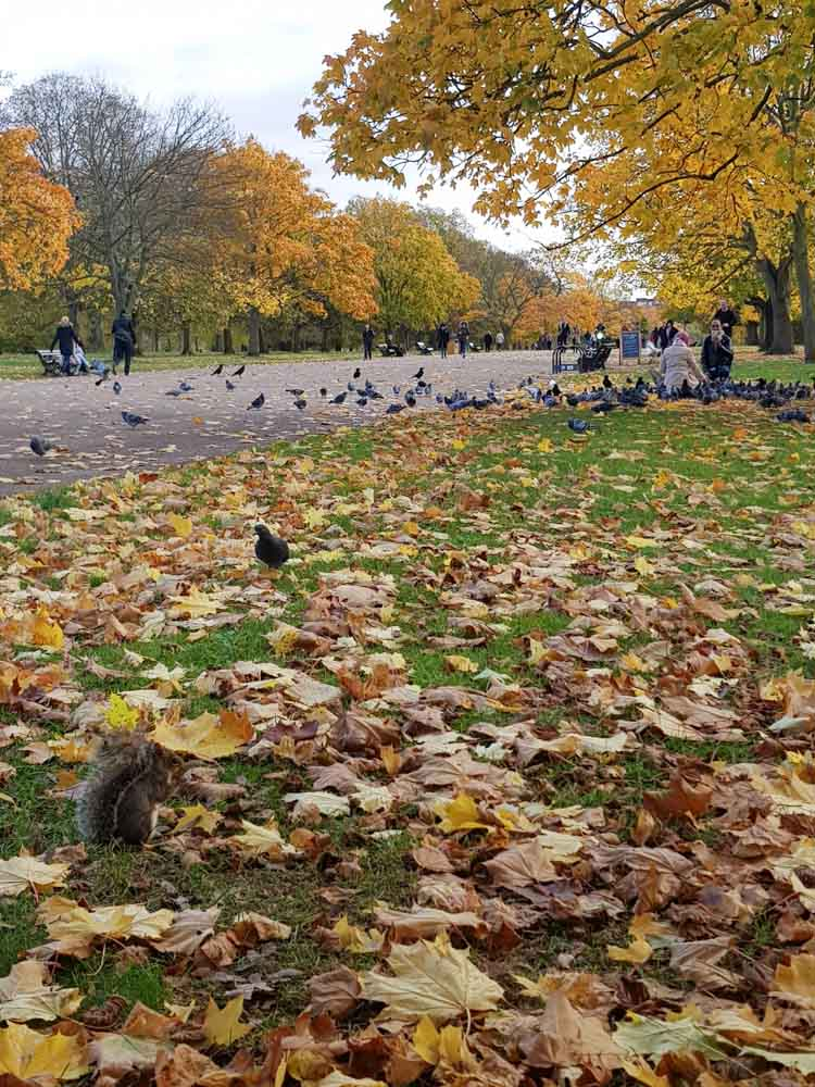 Hyde Park, herfst, Londen stedentrip - Map of Joy