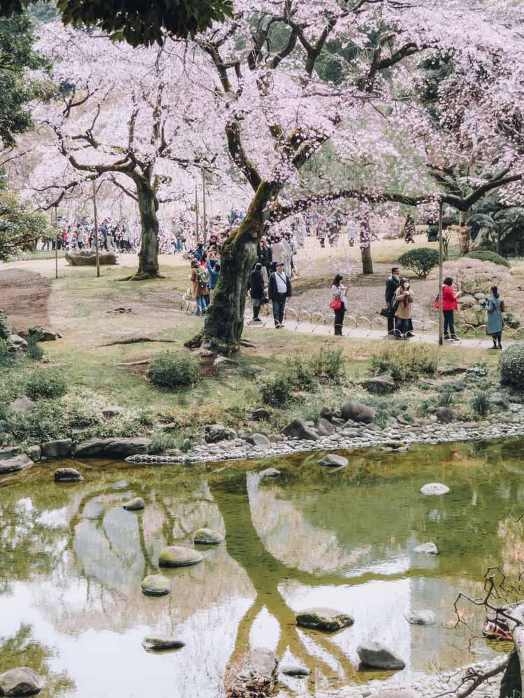 Koishikawa Korakuen tuin, beste plek om kersenbloesems te zien in Tokio - Map of Joy