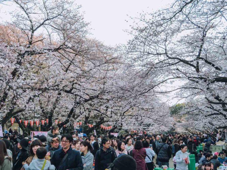 Ueno Park, beste plek om kersenbloesems te zien in Tokio - Map of Joy
