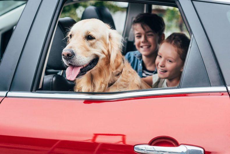 Tips hond mee op reis - Map of Joy