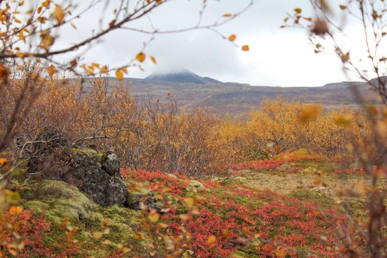 IJsland in de herfst: 3x de mooiste watervallen - Map of Joy