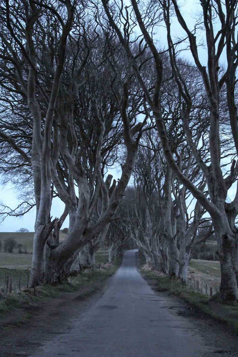 The Dark Hedges, de mooiste bezienswaardigheden van de Causeway Coastal Route [roadtrip route] - Map of Joy