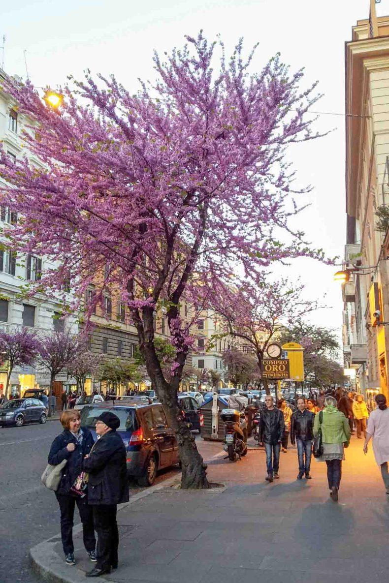 Prati, 9x de leukste wijken in Rome - Map of Joy