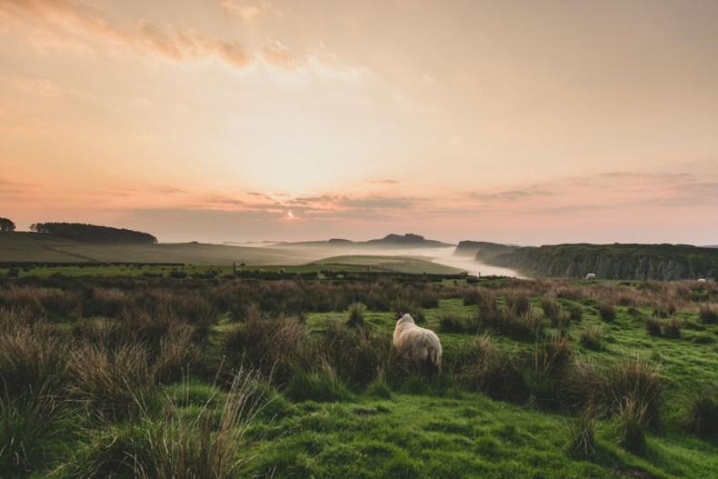 Wandelroute Hadrian's Wall Path, mooie wandelroute Engeland