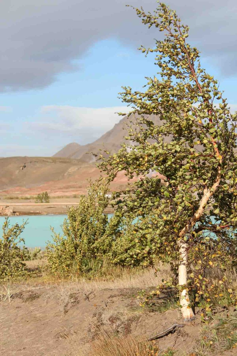 Myvatn meer, mooiste bezienswaardigheden rond Mývatn [roadtrip route] - Map of Joy