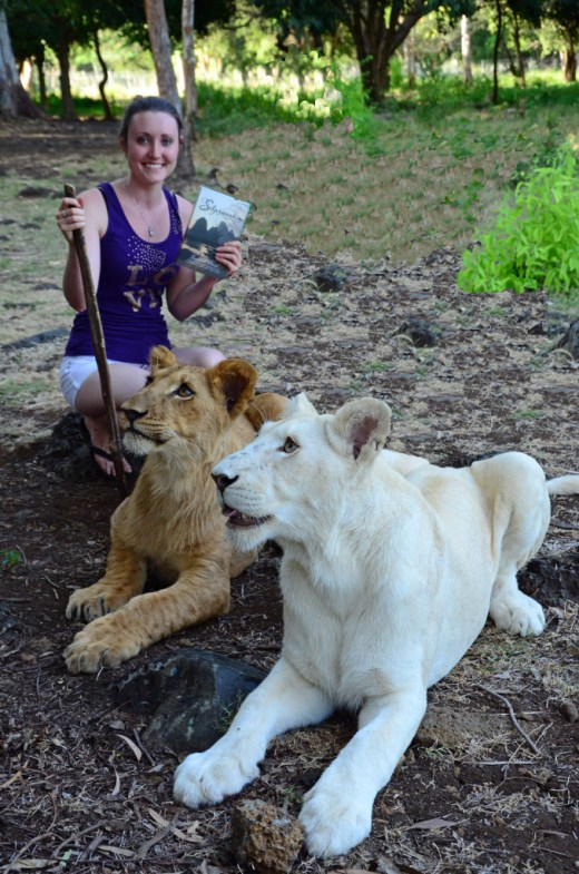 Walking with two gorgeous lions on a private walk for an hour, Mauritius.