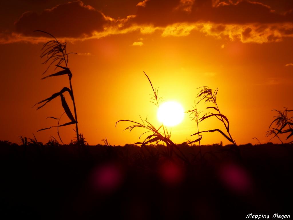 Sunset at Alligator River National Wildlife Refuge