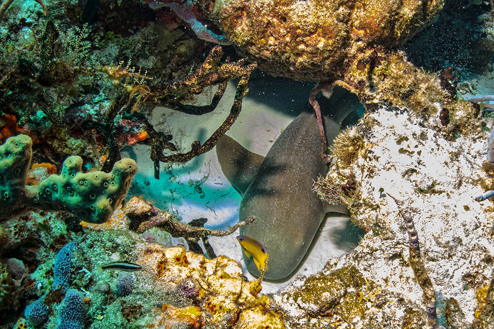 Diving in Cozumels Incredibly Reefs
