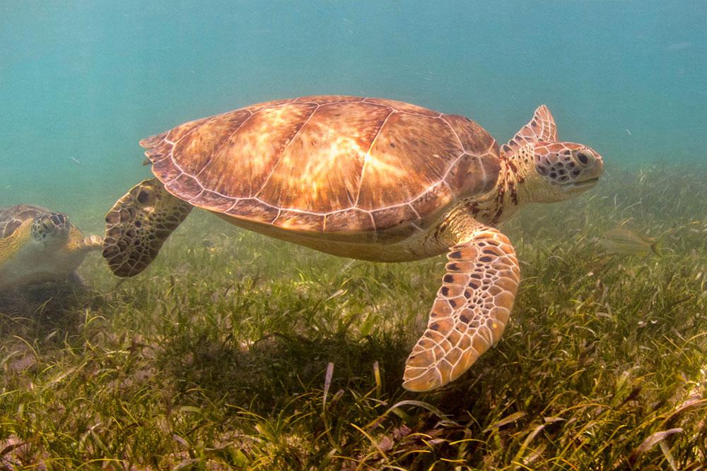 Swim with turtles in Akumal