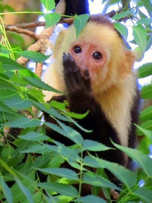Squirrel Monkeys - mischevious little devils!
