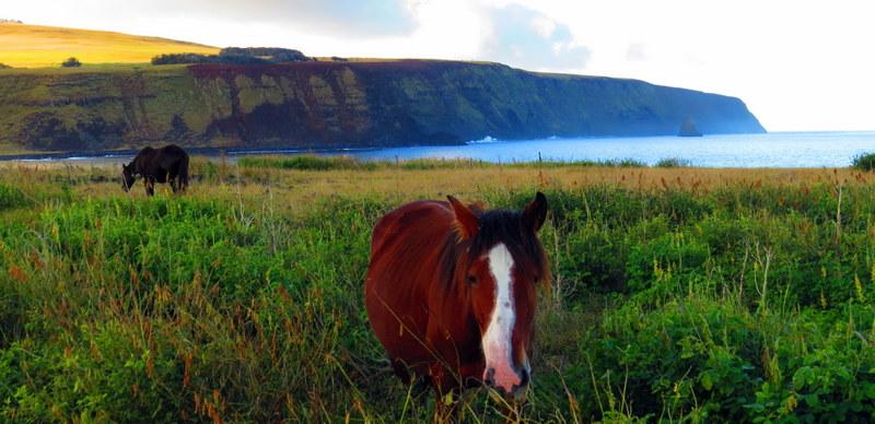 Wild horses roam free.