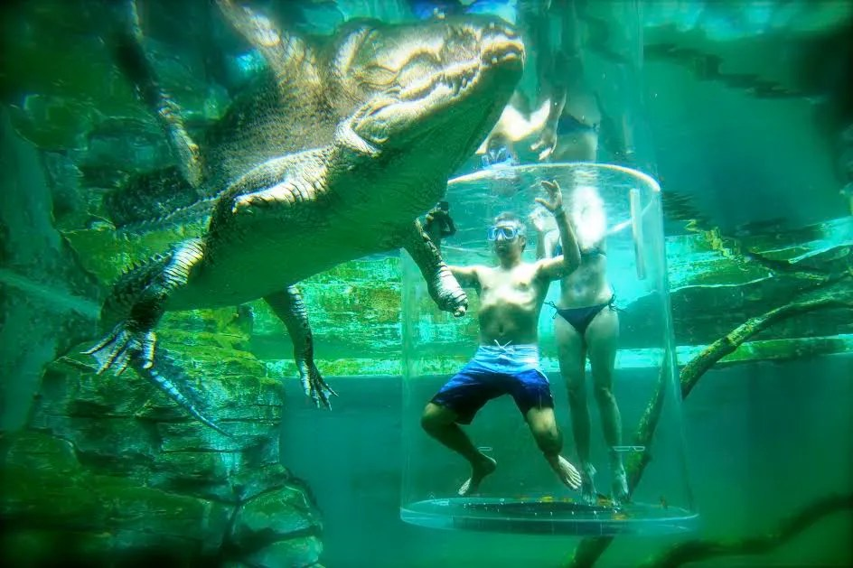 Cage diving with Crocodiles in Darwin, Australia.