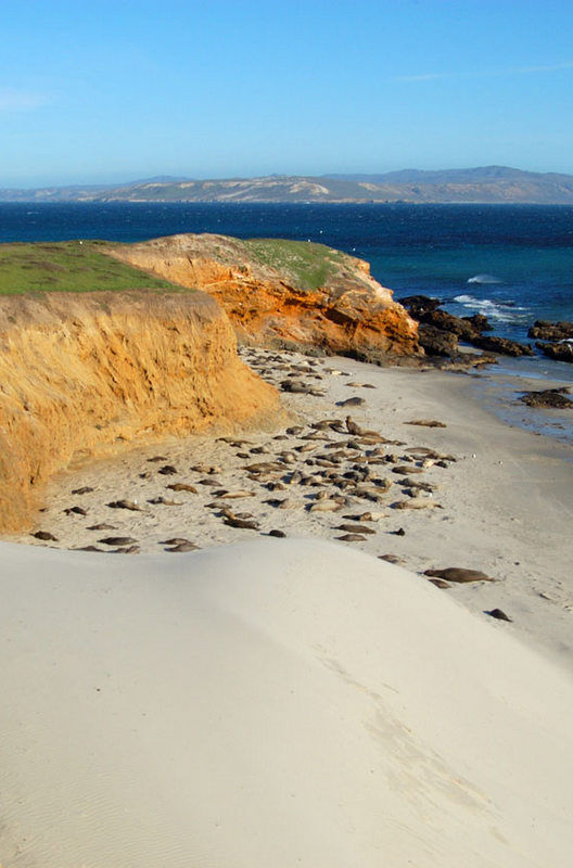 Elephant seals sleep in the sun. Active Point, San Miguel Island