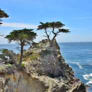 Snapshot From the Road: California's Lone Cypress