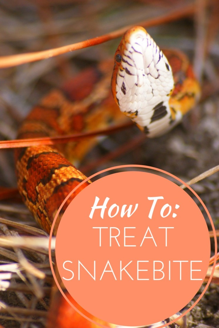 How to treat snakebite.