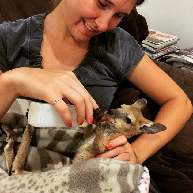 Volunteer with Native Animal Rescue.