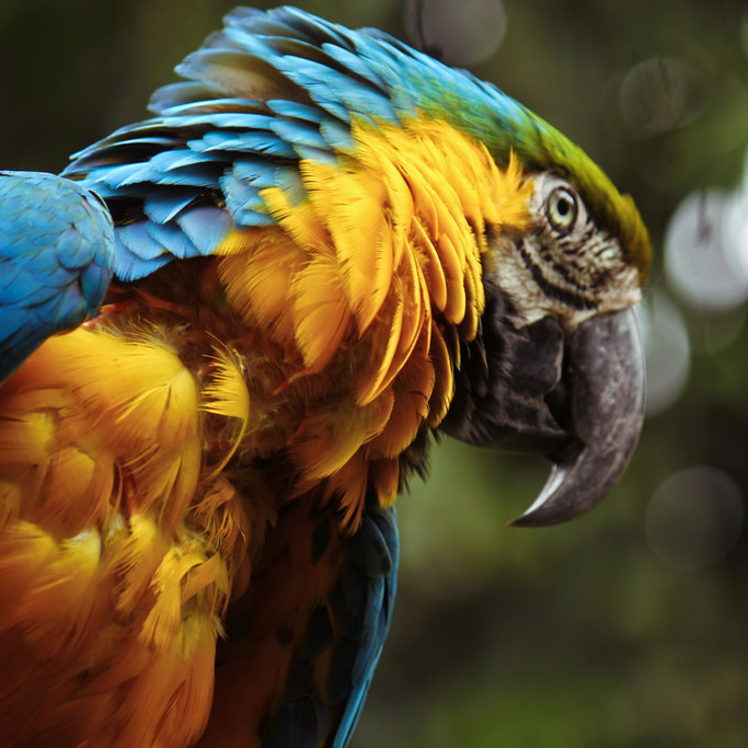 San Augustin, Colombia: It is here where you can spend your romantic holidays among thousand year old stone monuments, fascinating waterfall views, steep paths, and tropical gardens full of parrots!