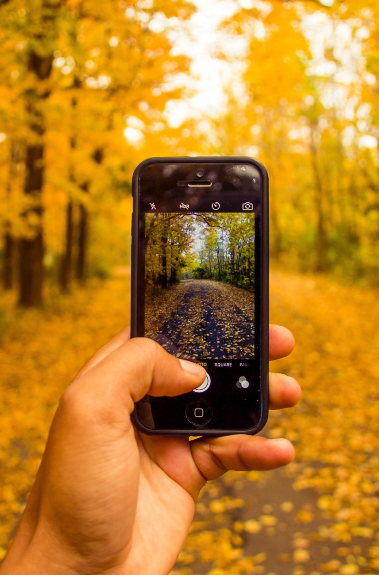 A Panoramic View: Top Landscape Photography Apps And Tips