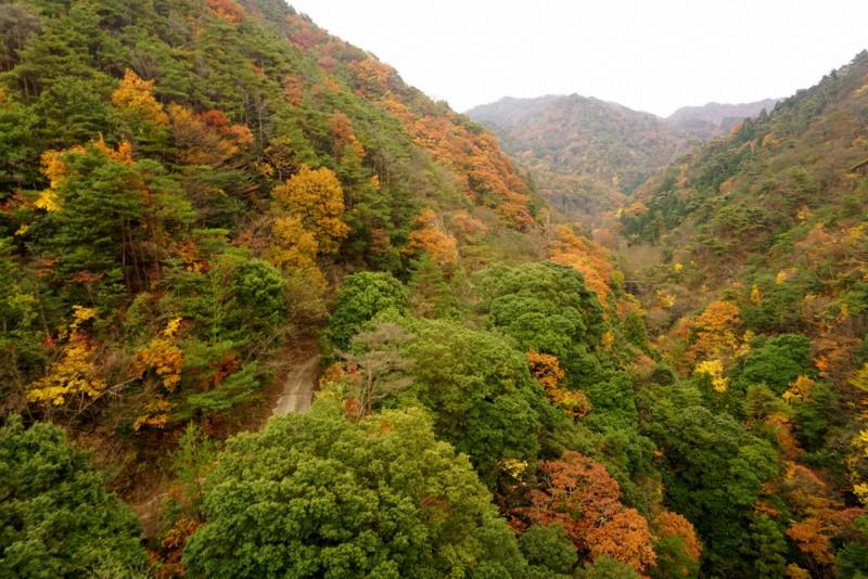 Mt Rokko Japan