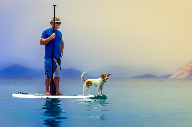 Stand up Paddleboard Dog
