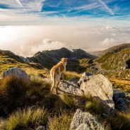 The Best UK Destinations for Dog Lovers