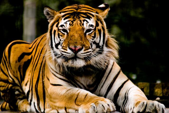Isle of Wight Zoo & Tiger Sanctuary
