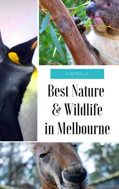 Melbourne may be Australia's second largest city, but just outside the city (and even within) you'll find incredible natural attractions where you can witness a wide range of wildlife.