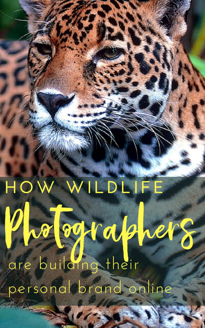 The following are some of the ways wildlife photographers are building their personal brand, and establishing a solid reputation via online presence.