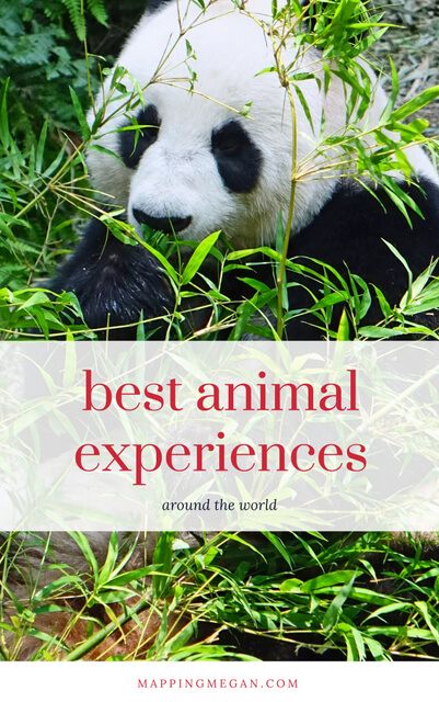 When it comes to wildlife and animal experiences, these are some of the best in the world!