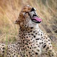 How to Choose an African Safari That's Right For You