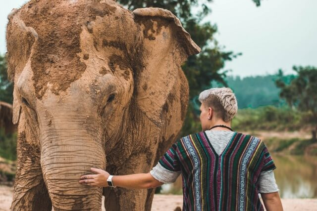 Elephant safari Asia India RF