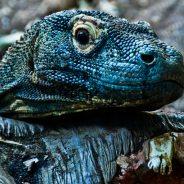 5 Reasons to Visit Komodo National Park (Indonesia)