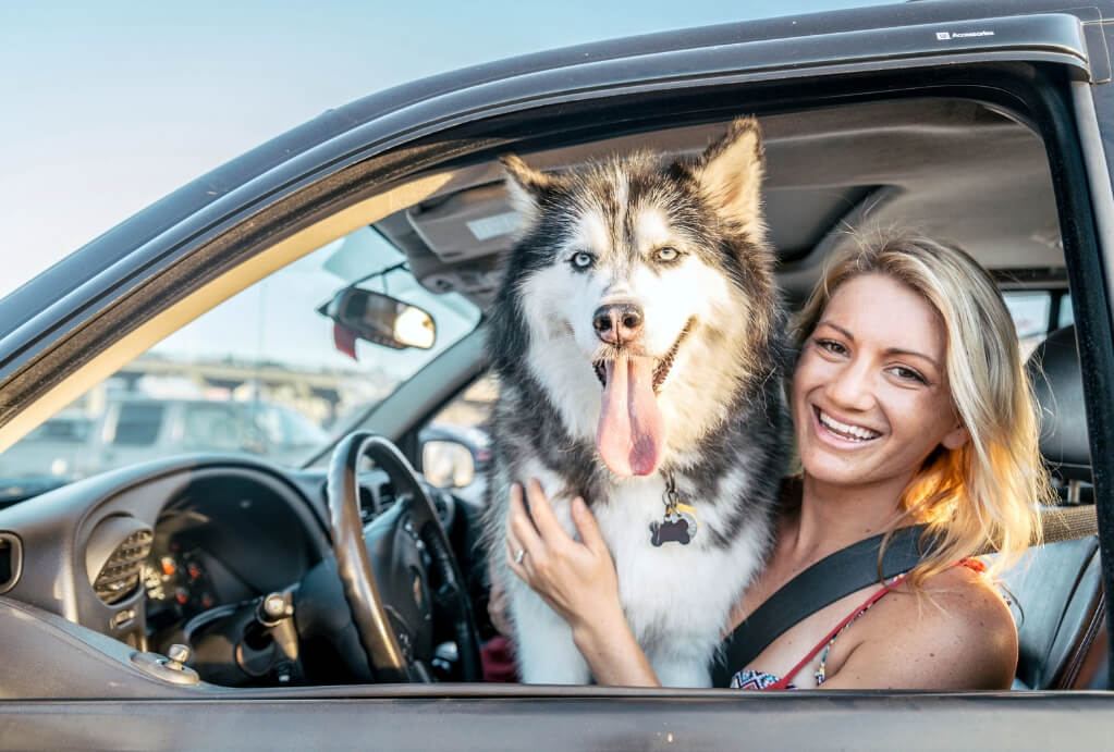 Traveling with your dog in the car RF