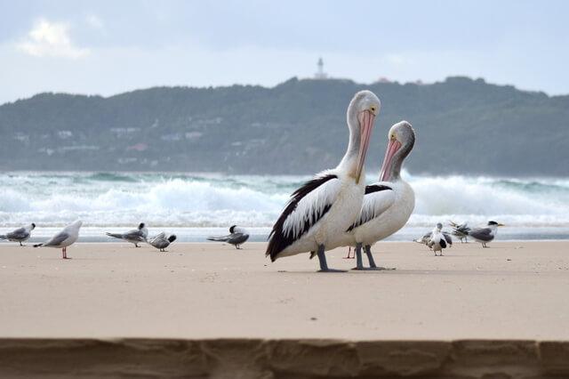 Pelicans beach Byron Bay