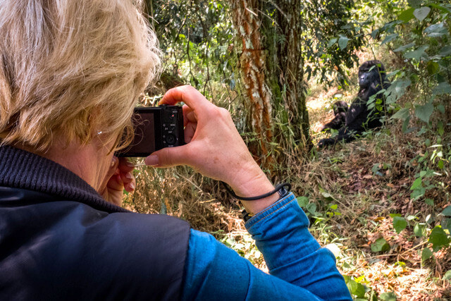 A tourist photographing gorillas trekking in the wild
