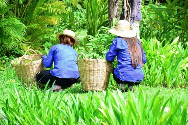 Glamping Hub Siem Reap Bungalows 1