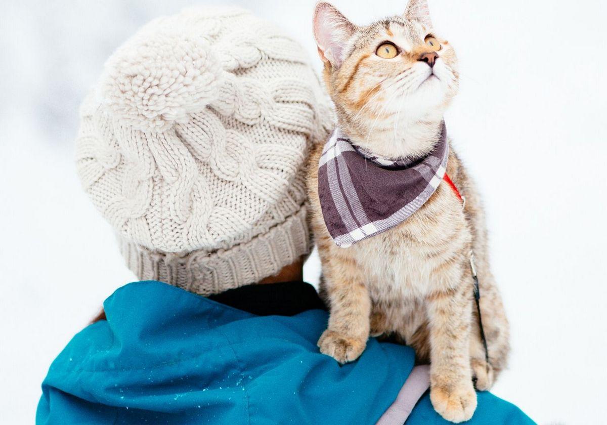 Travel winter cat pet RF